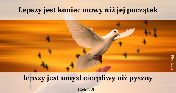 rozne-pl-21